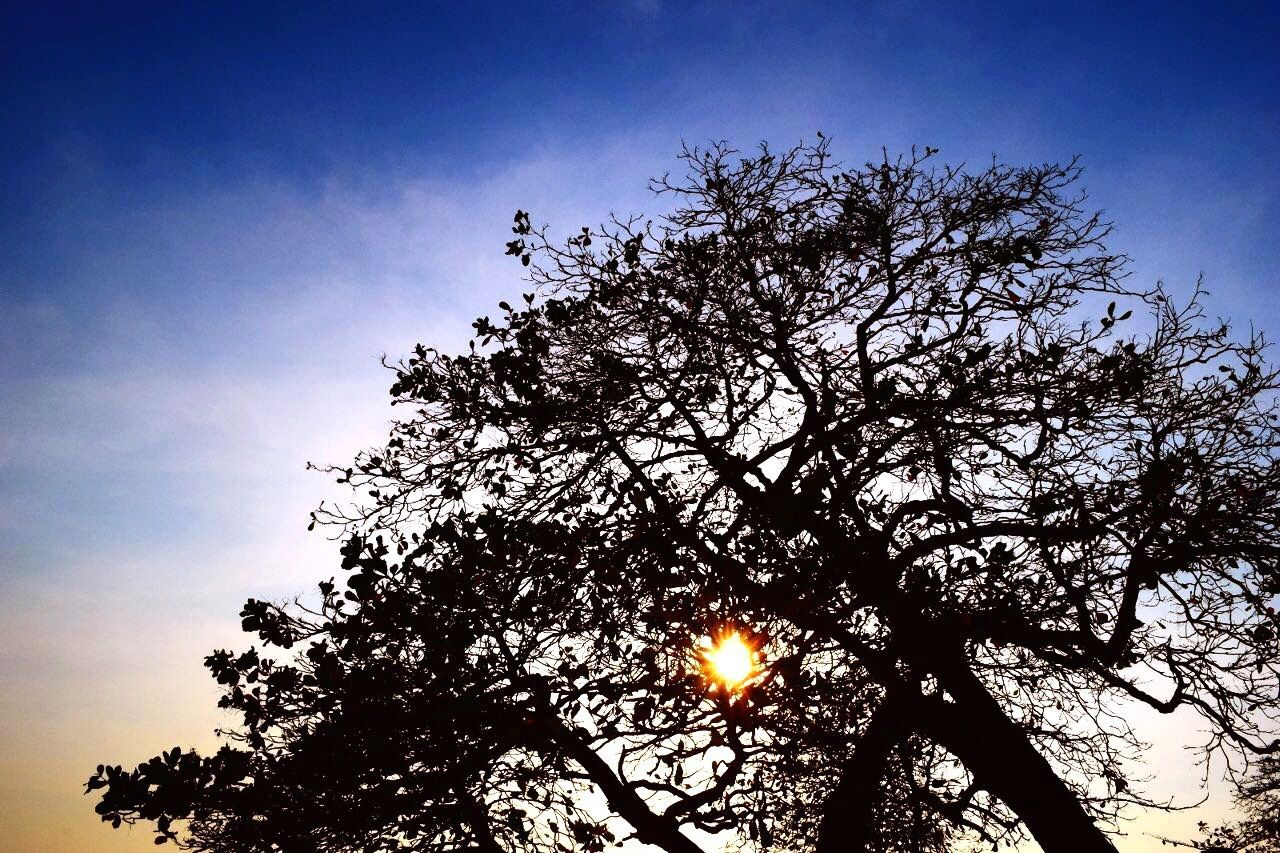 tree, nature, beauty in nature, sun, low angle view, sky, branch, silhouette, scenics, outdoors, tranquility, growth, no people, tranquil scene, moon, clear sky, sunset, day
