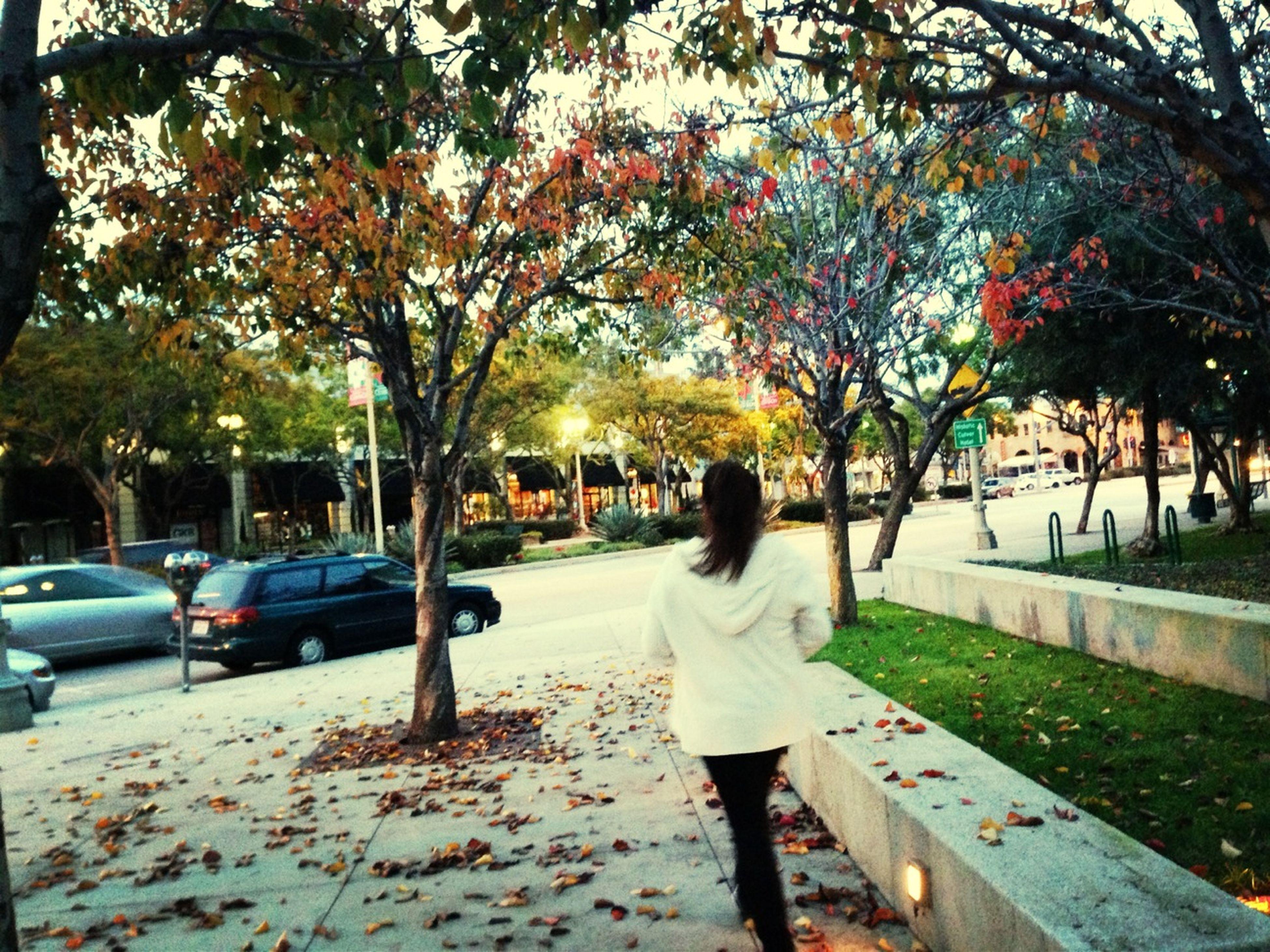 tree, street, transportation, road, lifestyles, season, car, men, rear view, walking, leisure activity, land vehicle, autumn, full length, sidewalk, mode of transport, person, park - man made space