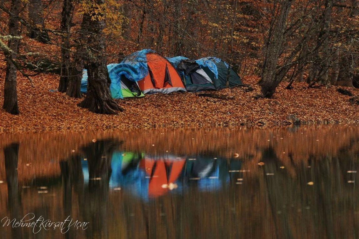 Sony A77 Autumn Colors
