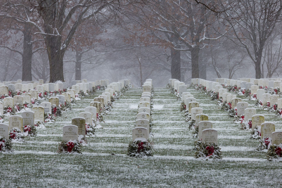 Beautiful stock photos of memorial day, American Culture, Arlington, Arlington National Cemetery, Bare Tree