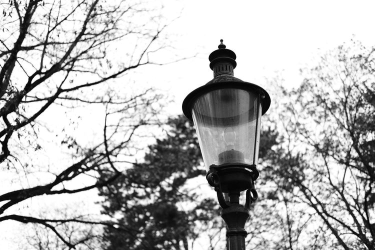 Architecture B Bare Tree Black Blackandwhite Branch Clear Sky Day Low Angle View Nature No People Outdoors Sky Streetlight Streetphotography Tree