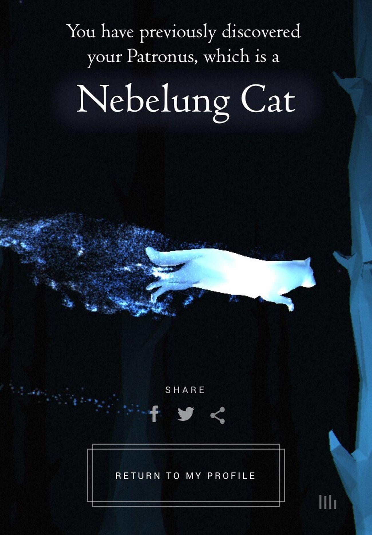 Patronus Harrypotter Harry Potter HP Harry Potter ❤ Blue Black Cat Nebelungcat Love Addmeonsnapchat lifewithlorena POTD Nice Gryffindor Snapchat Me lifewithlorena Germany Snapchat lifewithlorena Follow