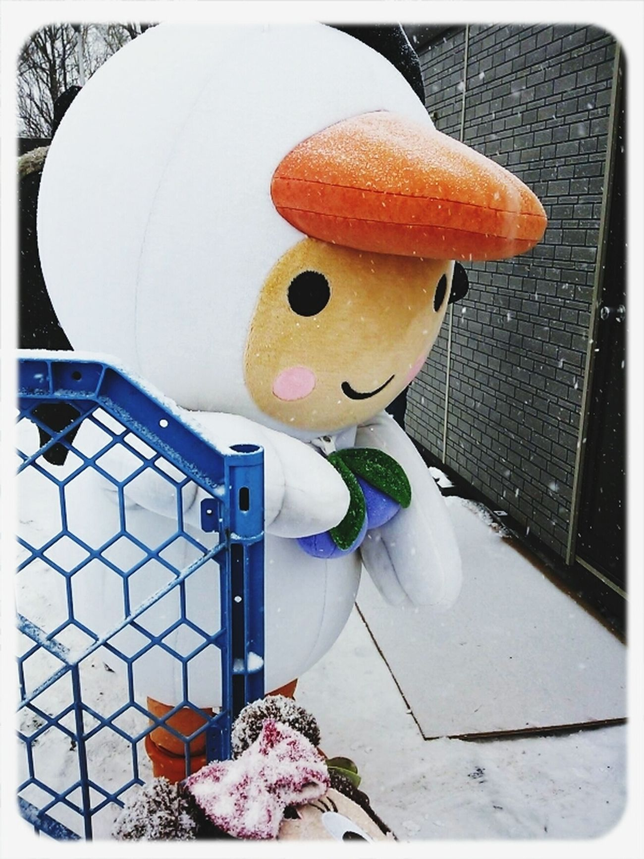 Tomachop Japan Mascot Characters Of JAPAN 地元のスケート祭りでのとまチョップ(・ω・)。