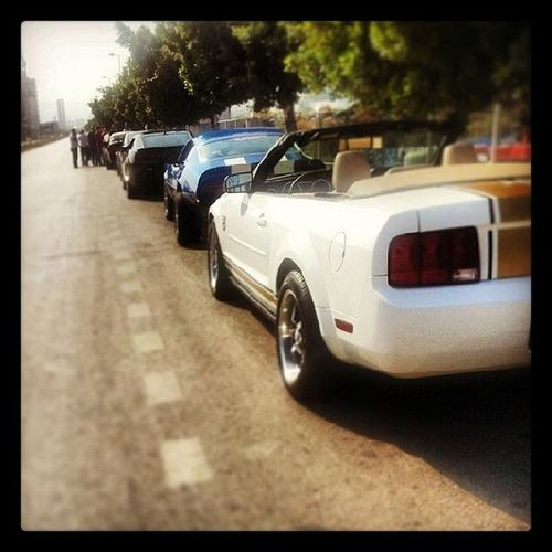 Latest Ride Mustang Marcharbel  Mci