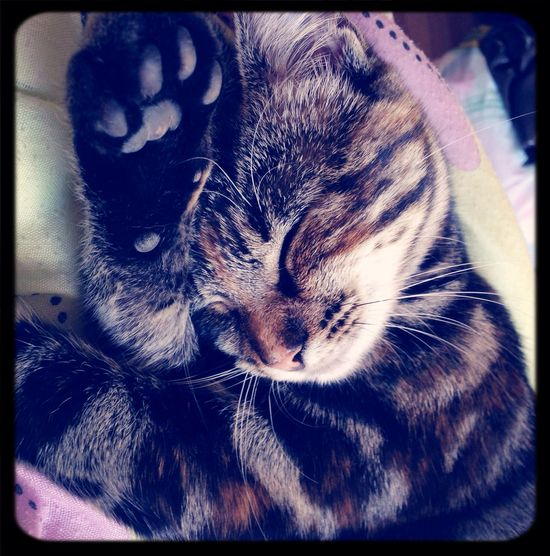 Sleeping Cat Minnie  Cute Pets Ilovemycat