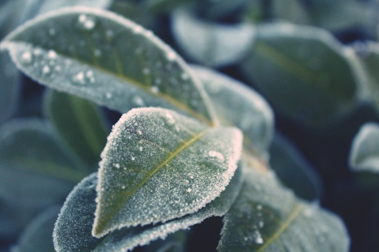 Close-up Drop Growth Nature Leaf No People Freshness Plant Wet Beauty In Nature Outdoors Day RainDrop Water Fragility Trees And Nature Nature_collection Nature Photography Nature On Your Doorstep Nature_perfection Nature Beauty In Nature Naturephotography Winter Winter Wonderland