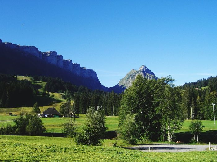 Eriz Mountain Nature Outdoors Blue Clear Sky Sichle Tree Switzerland Wonderful Day Mountain Peak Bernese Oberland Country Life Sunlight Plants Mountains And Sky