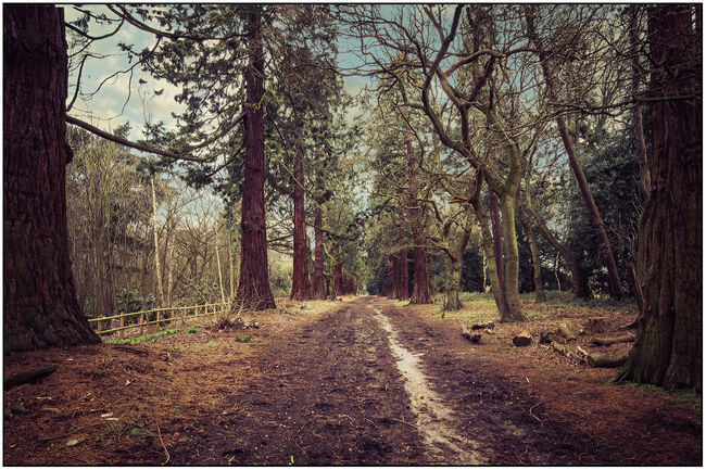 If you go down to the woods today! Bare Tree Branch Day Fence Field Forest Forest Walk Grass Grassy Growth Landscape Leading Leading Lines Mystery Narrow Outdoors Perspective Remote Rural Scene The Way Forward Tree Tree Trunk Wood Wood