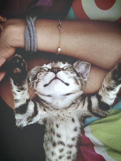 Dead Cat Sleeping Cat