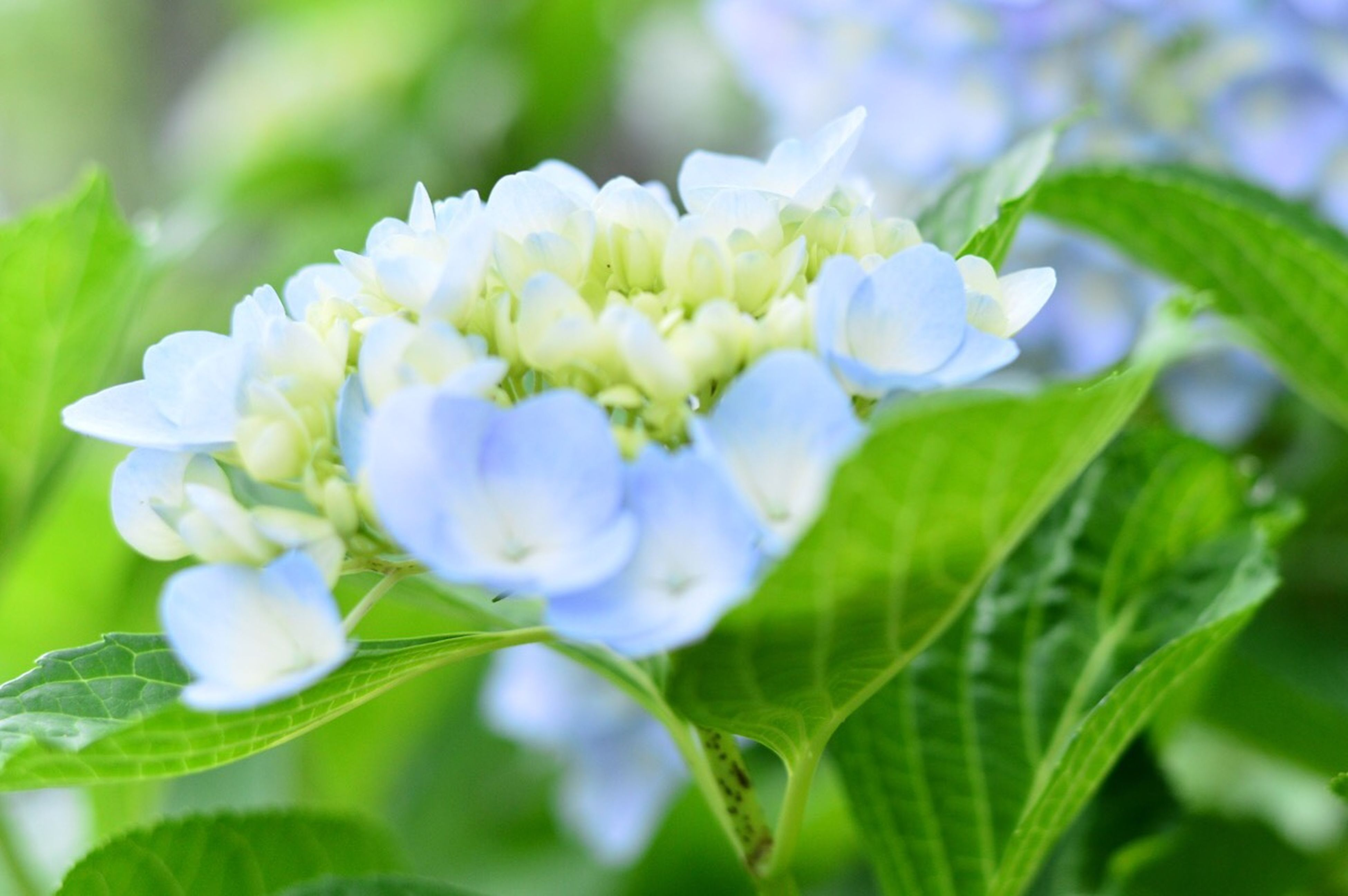 freshness, flower, growth, fragility, petal, leaf, beauty in nature, close-up, plant, flower head, focus on foreground, nature, blooming, green color, bud, white color, selective focus, in bloom, blossom, stem