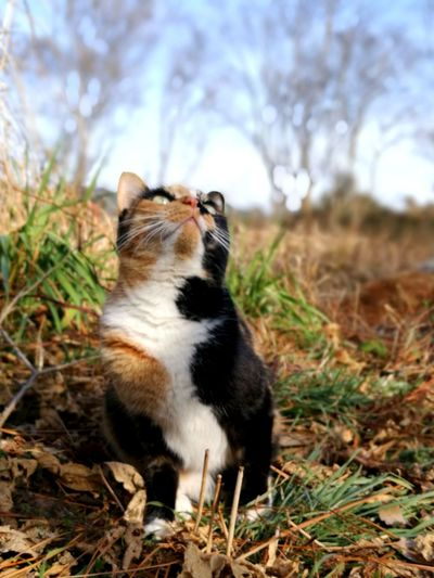 she is looking at a bird. Lovely Cat Cat Lovers Calico Cat One Animal Pets Domestic Animals Animal Themes Domestic Cat Animal Mammal No People Sitting Cute Feline Portrait Outdoors Day Nature Sky
