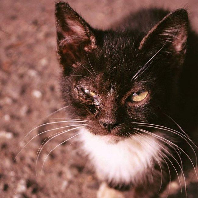 Cat Kitty Streetcat Sorrow Yoshkarola Yoshkinkot Homeless Pussy котёнок бездомныеживотные бездомный бездомныйкотик бездомныикотенок рана усы лапы подбитый подбитыйглаз боец потеряшка уличныйкот