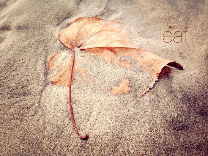 Leaf Nature_collection EyeEmBestPics Eye4photography