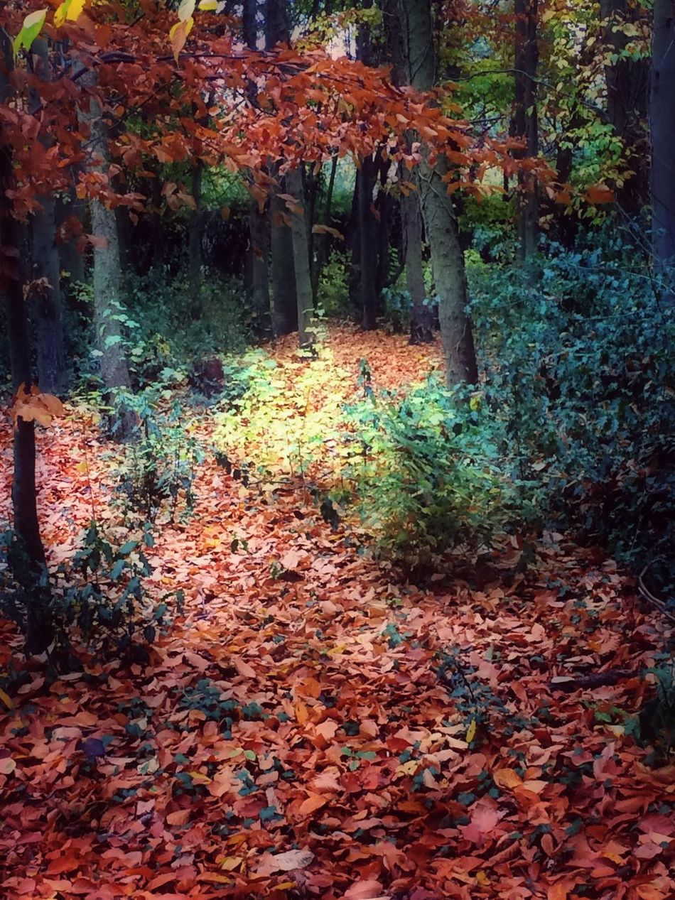 Photography Autumn Autumn Colors Nature Beauty In Nature Forest Growth No People Trees Leaves Fallen Light And Shadow Outdoors Eyeem Edit Picsart Edit My Edit