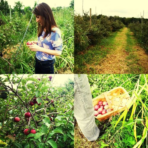 Apple picking at The Fruit and Berry Patch Apples Summer