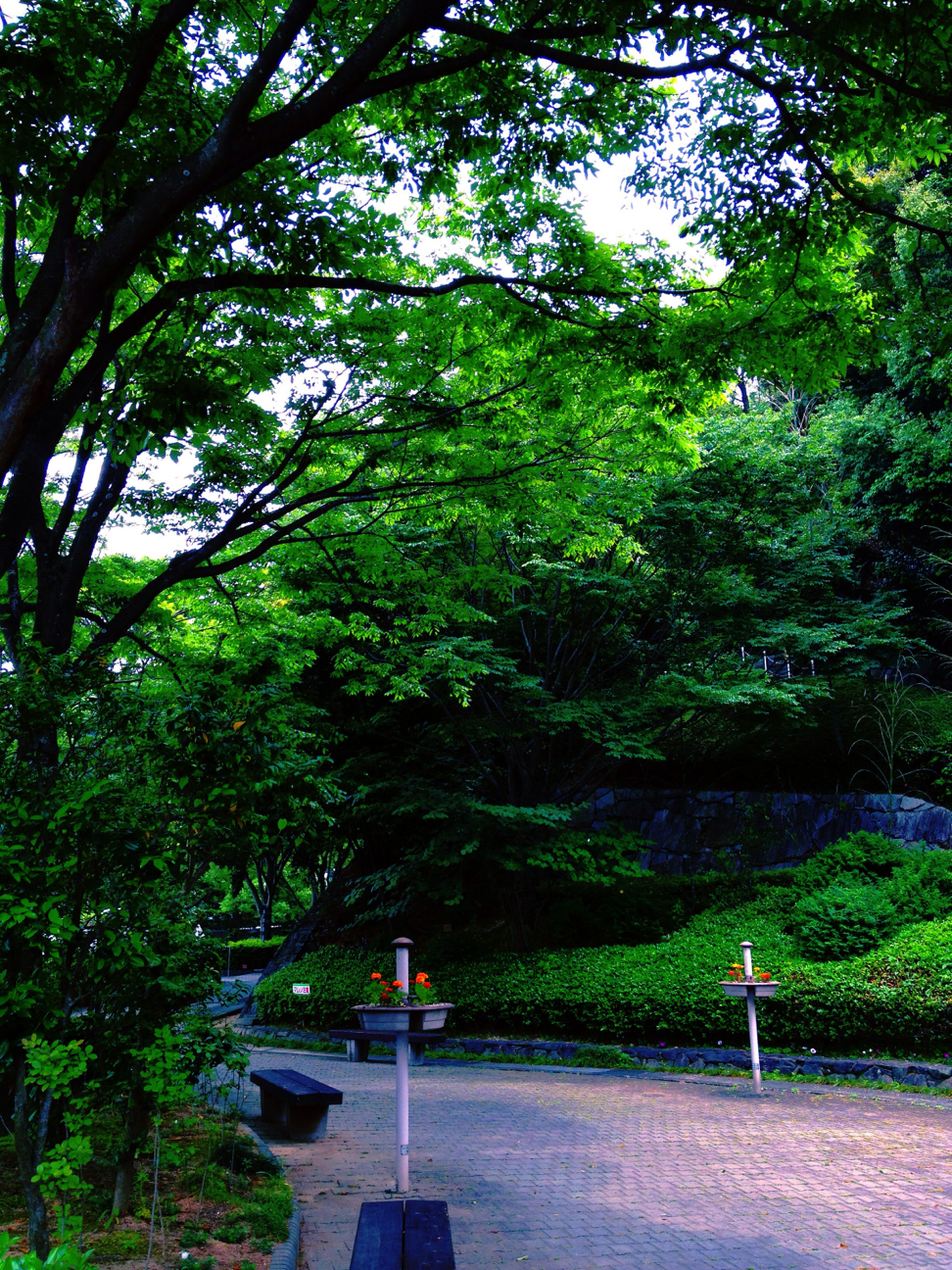 tree, growth, green color, tranquility, transportation, lush foliage, nature, park - man made space, branch, forest, the way forward, street light, tranquil scene, beauty in nature, road, day, scenics, outdoors, lighting equipment, green