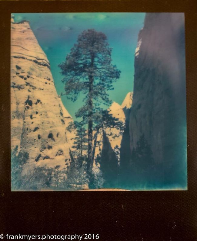 New Mexico Desert Landscape Tree Mountain Impossible Project
