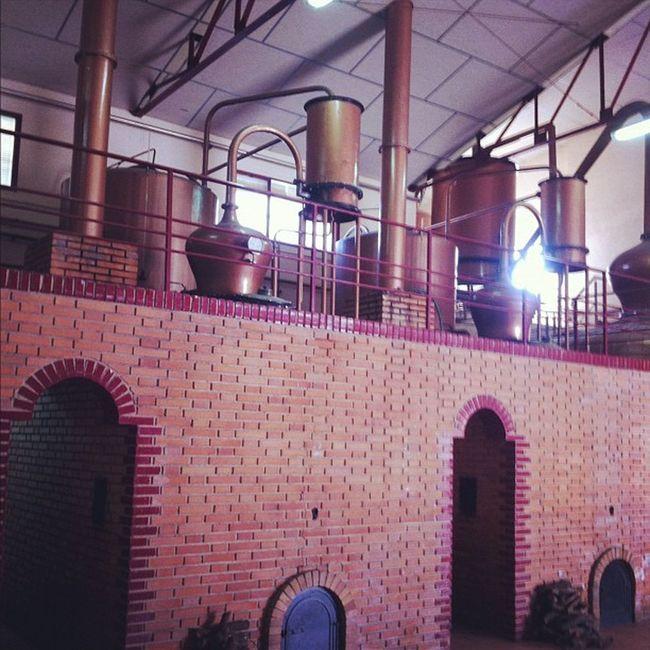 Los alambiques de destilación. Todo un arte