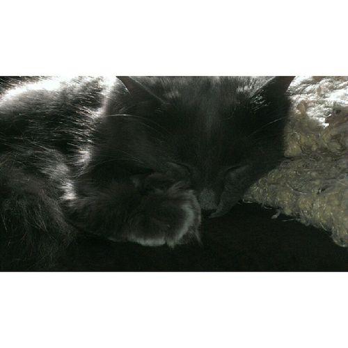 Little Monkey Garth. Catsofinstagram Sundaynap