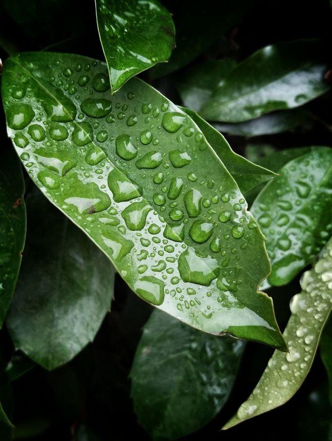 Raindrops Droplets Close Up Rainy Days Rain Drops