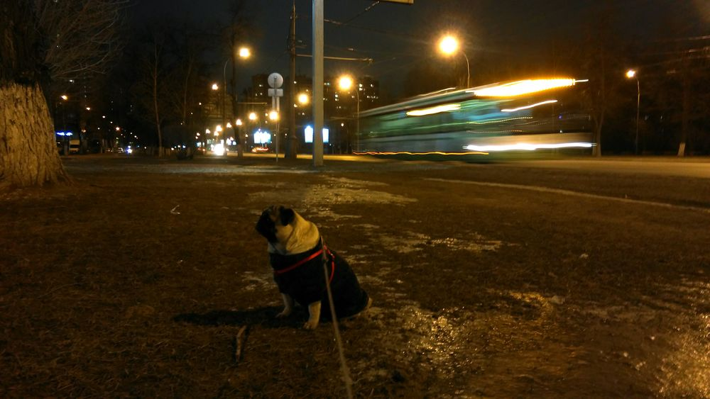 Night Lights Nightphotography Streetphotography Htcm8 My Lovely Dog Dogs Of EyeEm Asphalt Myhtc Speed Cities At Night