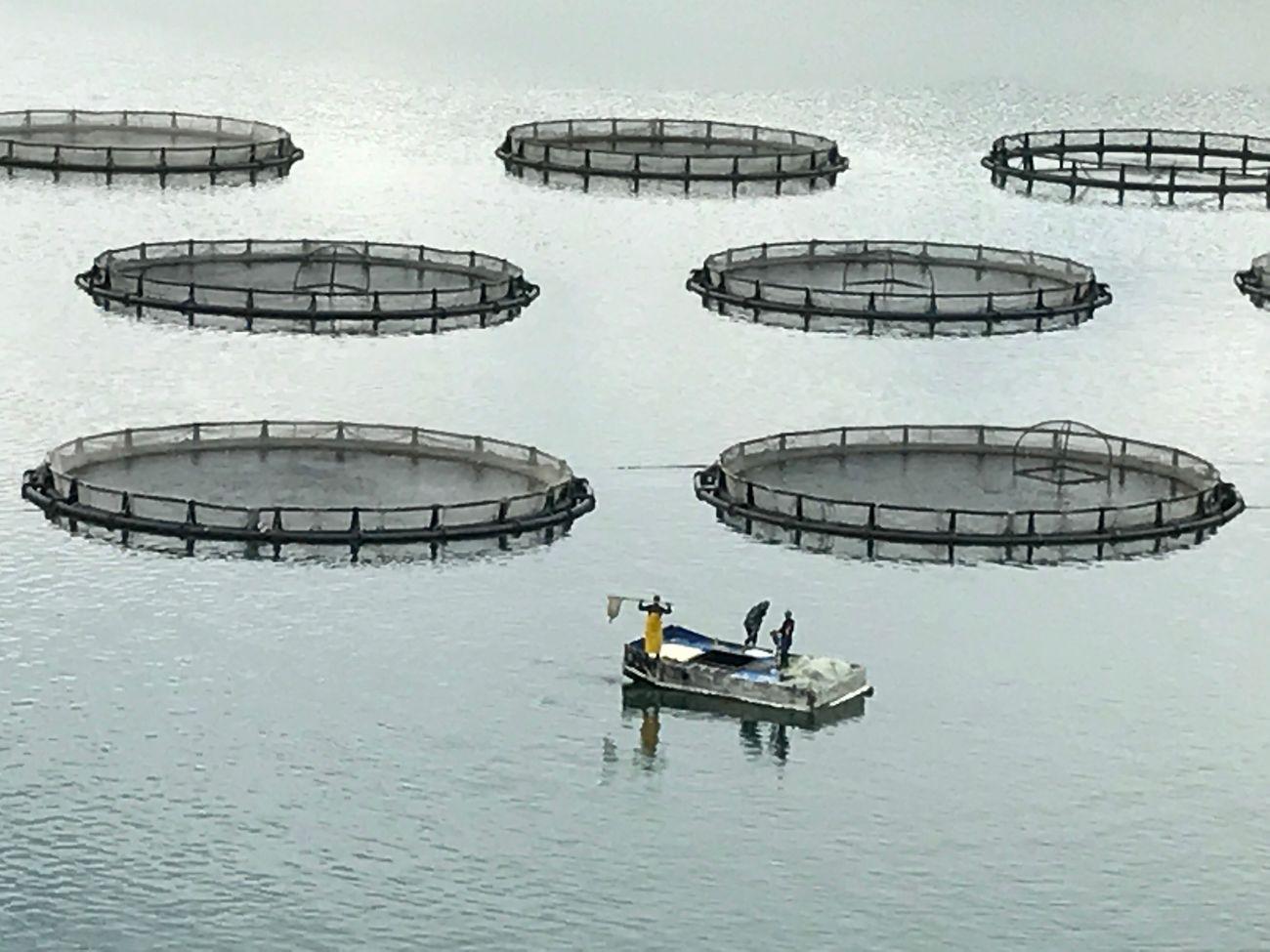 Fishfarm First Eyeem Photo