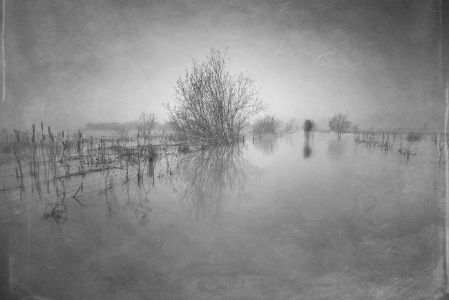 Mist-er Reflection Waterfront Tranquil Scene Bare Tree Standing Water Long Exposure Beauty In Nature Monochrome Photography Northamptonshire Scenics Tranquility Flood EyeEm Masterclass Nature Photography Landscape_photography Bw Photography Lone Walker Lone Person Foggy Misty Foggy Morning Reflections Non-urban Scene Water Calm