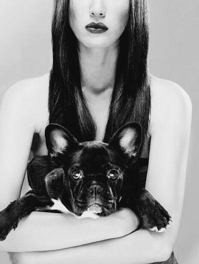 throwback,photoshoot Blackandwhite Asian  Beauty Frenchbulldog