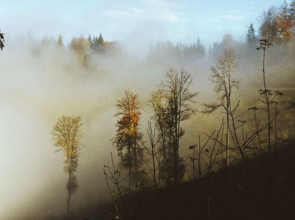 Beauty In Nature Cloud - Sky Day Fog Foggy Growth Hazy  Mist Misty Nature No People Non-urban Scene Outdoors Scenics Sky Sunrise - Dawn Tranquil Scene Tranquility Tree WoodLand