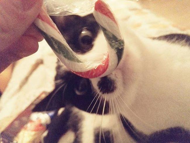 Karacsonyi csendelet :-) Cat Mycat Lovelycat Lovemycat Christmas Happyholiday Marrychristmas  Xmas Karacsony Boldogkaràcsonyt Boldogkaràcsonyt Boldogkarit Proplanholiday Catsofinstagram Animal