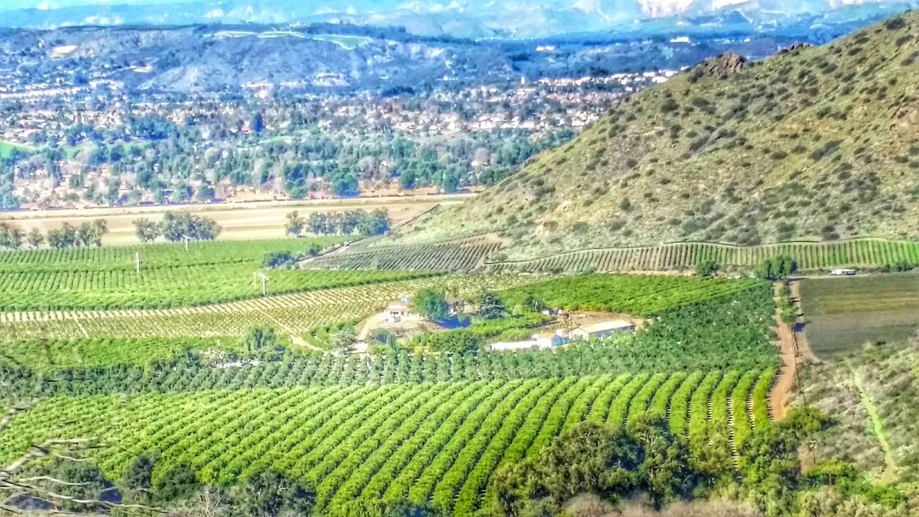 California Love Los Angeles, California Agriculture Landscape_Collection