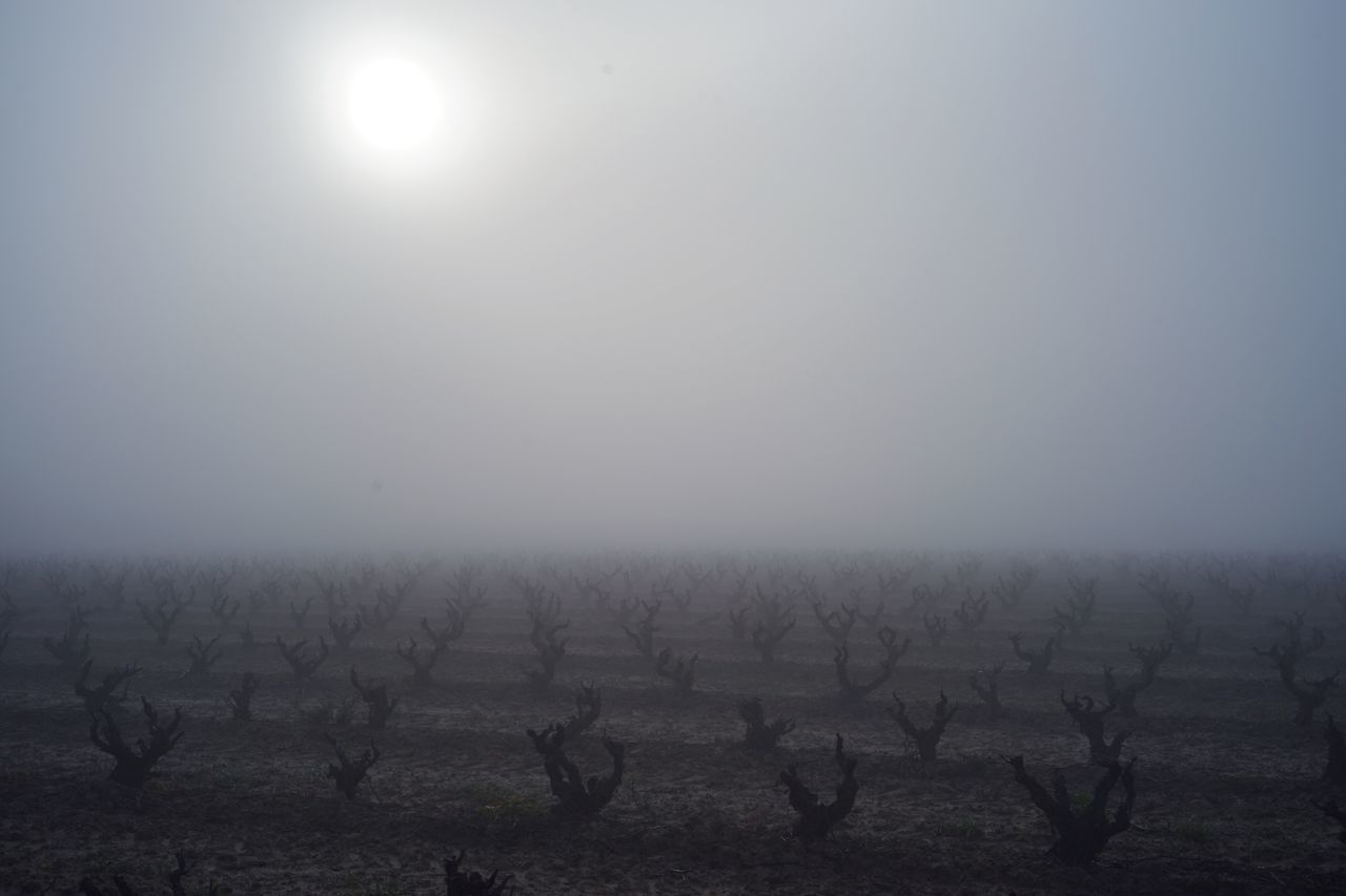 The Way SONY A7ii Landscape Grape Tree SPAIN España Travel Morning Smoggy Dawn CaminodeSantiago Camino Travel Photography Sunshine In Camino Sky Backpackers Backpacking