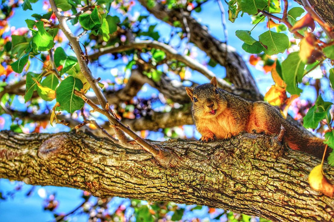 Walking Around in Park and found this cute Squirrel on the Tree . Hello World My Winter Favorites Animals Cute Animals Squirrel Closeup Smile Nature On Your Doorstep EyeEm Nature Lover The Great Outdoors - 2015 EyeEm Awards The Photojournalist - 2015 EyeEm Awards Legg Lake At The Park Adventure Buddies