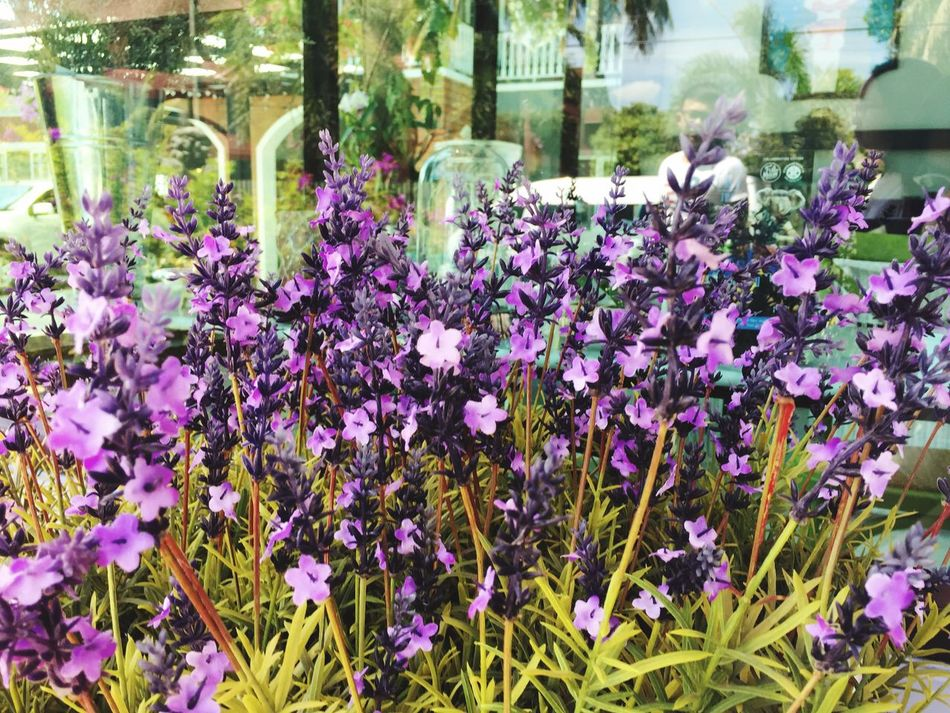 Flowers Purple Relaxing Relief Plant Nature Therapy