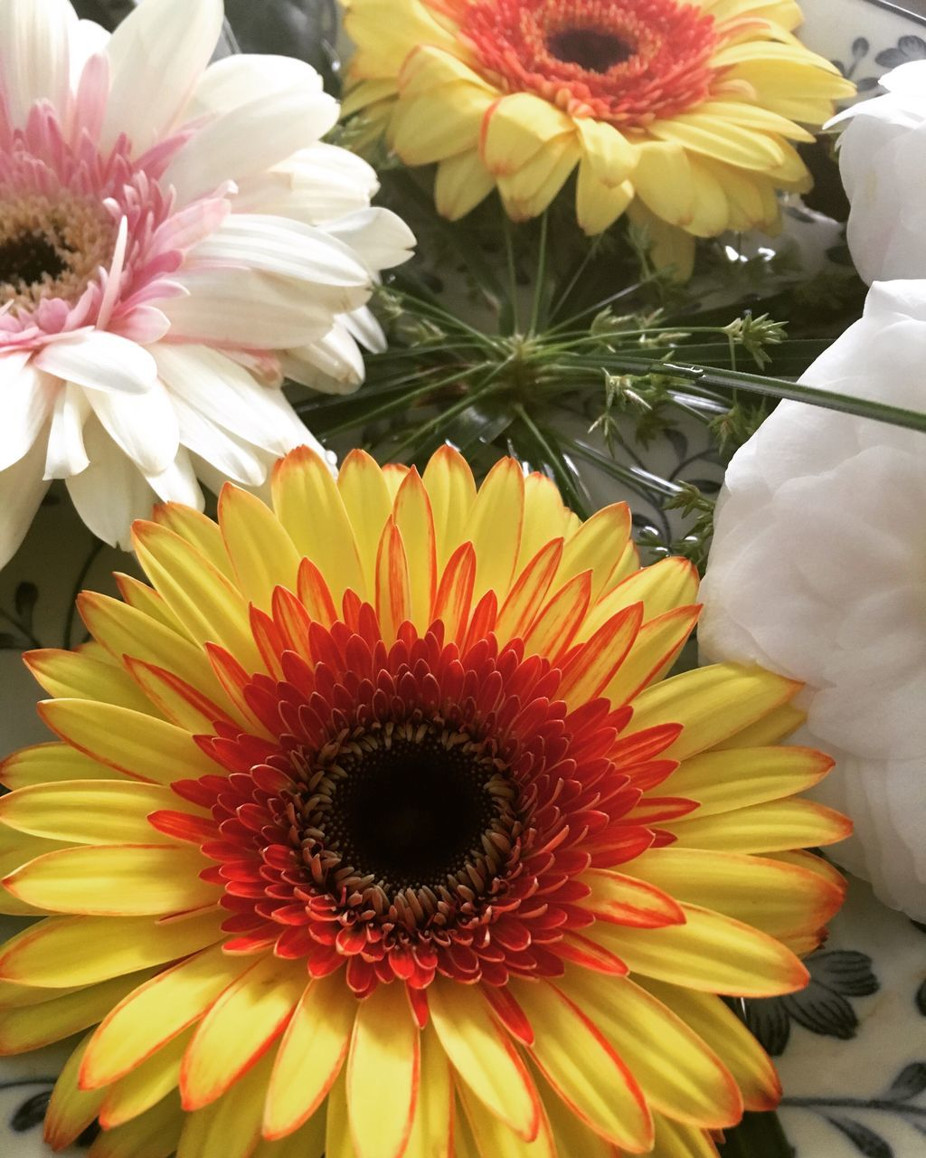 flower, petal, fragility, flower head, freshness, beauty in nature, close-up, nature, pollen, no people, growth, day, outdoors, blooming, backgrounds, gerbera daisy, chrysanthemum
