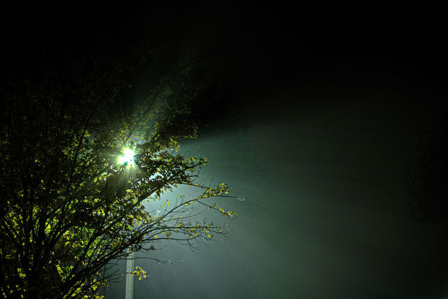 Back Lit Beauty In Nature Branch Bright Dark Filmnoir Filmnoirmood Green Growth High Section Lamplight Low Angle View Majestic Nature Night Nightphotography No People Noir Outdoors Scenics Sky Sun Tranquil Scene Tranquility Tree