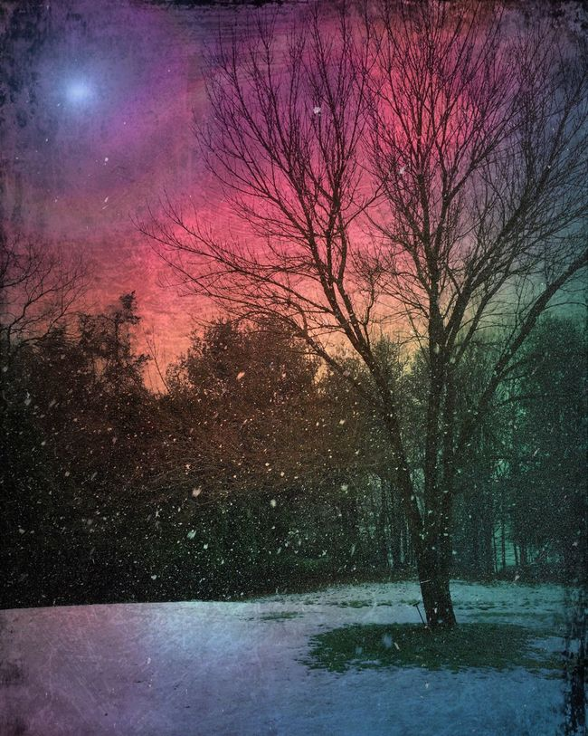 Digital Painting Nature Landscape Rural Landscape Trees And Sky Winter Scene Snow Night Sky Wintertime Tree Sky Rural Scenes Mood Winter Night My Winter Favorites