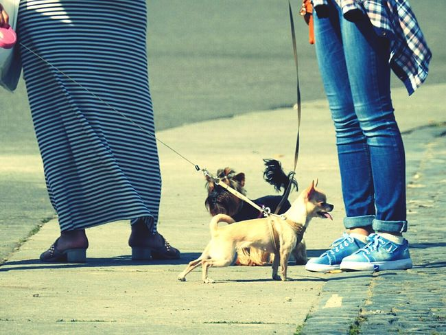 Dogs Palace Square Walking Around Pets Human Foot Day Summer 2016 Sankt-Petersburg Russia Big City Life Colour Of Life