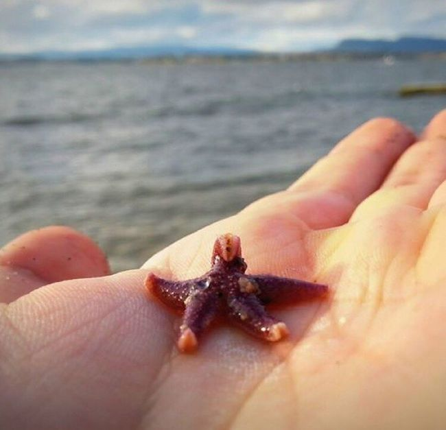Little starfish Starfish  Starfish At Beach Norway Norwegen Fjord Seestern Cute Animal Sun