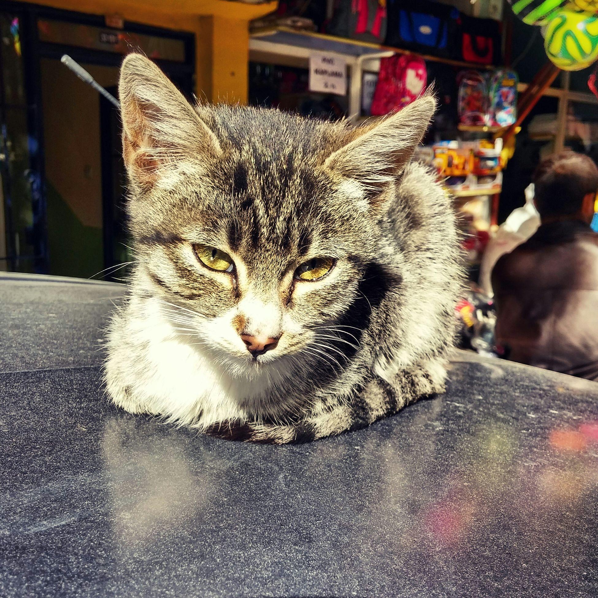 Catsagram Nature_collection Animals Cat Kedicik Minik Kedicik çokminnoş♥♥ Streetart Street Art Cool Stuff