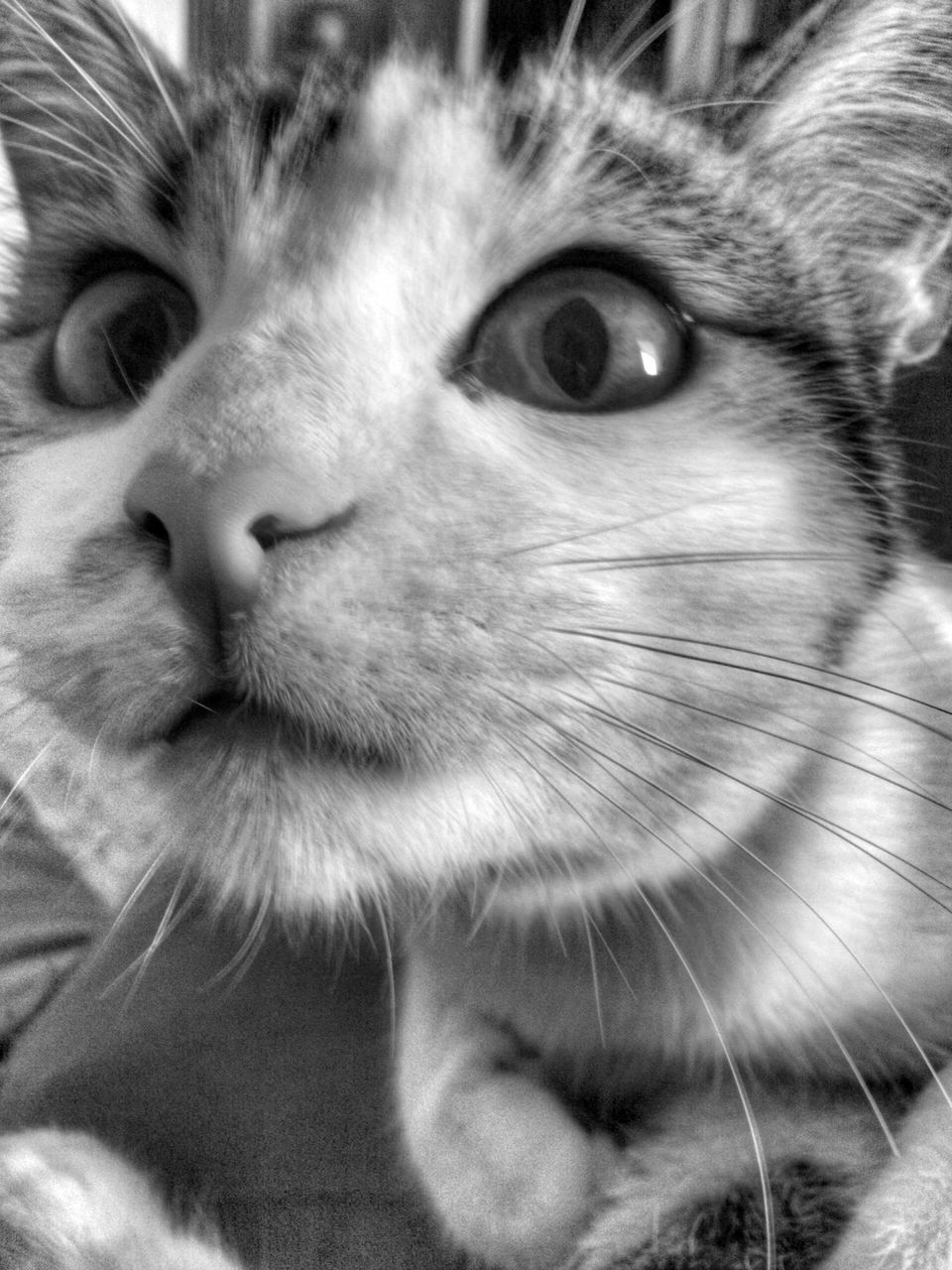 pets, domestic animals, animal themes, one animal, mammal, domestic cat, whisker, close-up, no people, feline, portrait, indoors, day