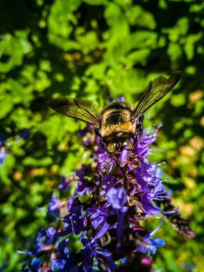 Nature Set Insect Animals In The Wild Nature Animal Themes Purple No People Plant Butterfly - Insect One Animal Flower Beauty In Nature Fragility Outdoors Animal Wildlife Day Close-up Freshness Perching Spread Wings RahimNoel Rahim New York NYC Beauty In Nature NY