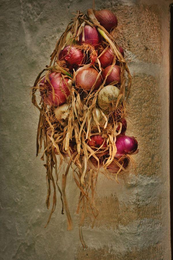 Onions Onion Onion Plant Onions Vegetables