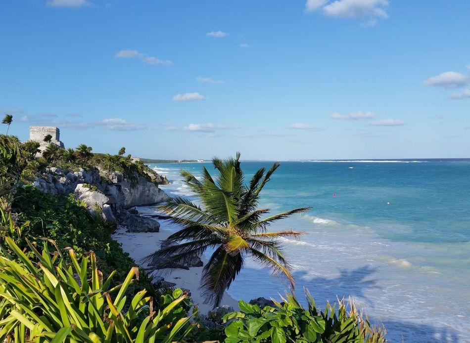 Tulum , Rivera Maya. Palm Tree Sea Horizon Over Water Nature Sky Beach Scenics Tropical Climate Beauty In Nature Water Day Outdoors Beach Photography Beach View Beach Life Leasuretime Nature Beach Day Beauty In Nature Tulumruins
