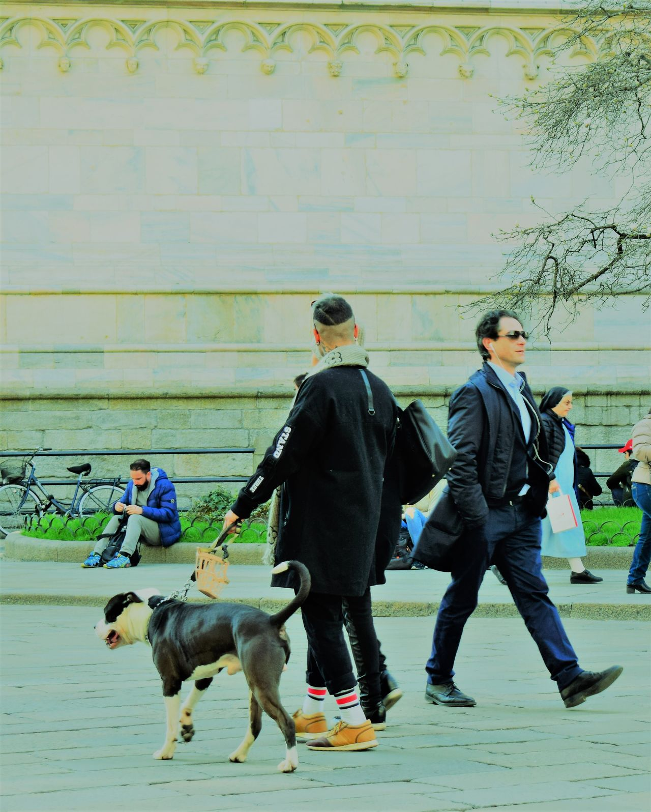 Street foto/Milan Dog Pets Crime Police Force Domestic Animals One Animal Men Labrador Retriever Law People Mammal German Shepherd Arrest Outdoors Day Adult
