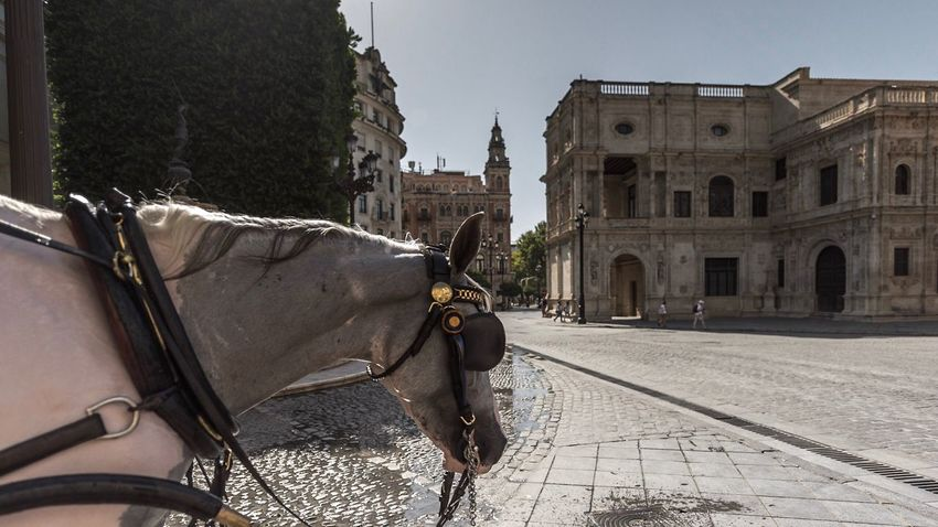 Horse Domestic Animals Animal Themes Mammal One Animal Working Animal Built Structure Day Horse Cart Architecture Building Exterior Outdoors Sky No People