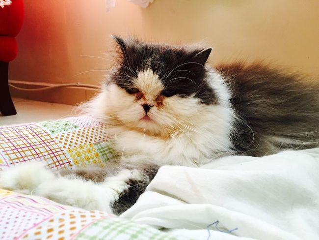 Hi! Cats I Love My Cats  Cat♡ Cat I Love My Cat Hello World Brasil ♥ Lovecats❤️ Brazil