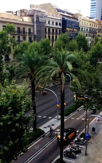 Streets of Barcelona 🌴 a view from my Interrail trip 🌵♥️ Barcelona SPAIN Streetsofbarcelona Avinguda Diagonal Palm Tree Taxi Vespa Bicycle Architecture Breakfast View View From Above City Built Structure Street Transportation Travel Destinations Cityscape
