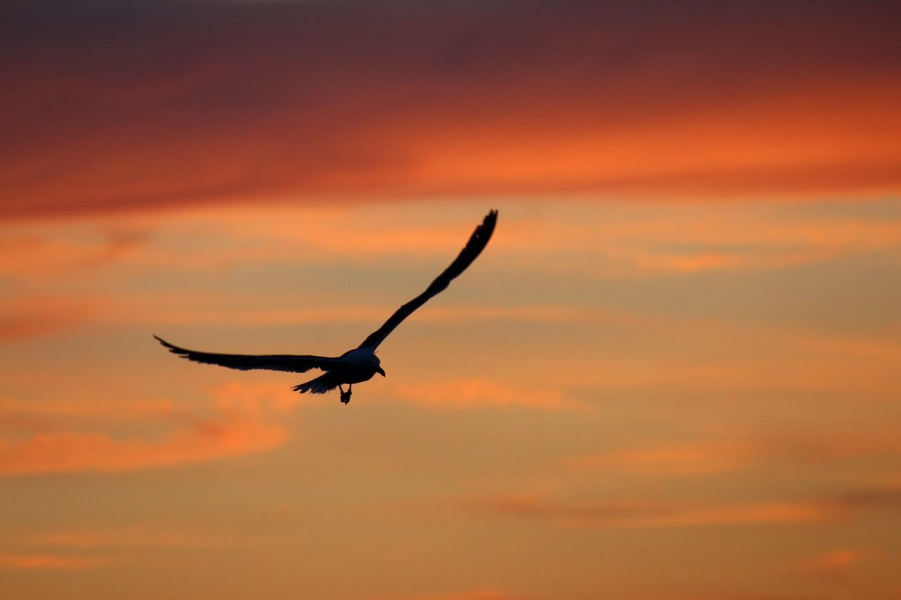 Beautiful stock photos of silhouette, Animal Themes, Animals In The Wild, Bird, Dusk