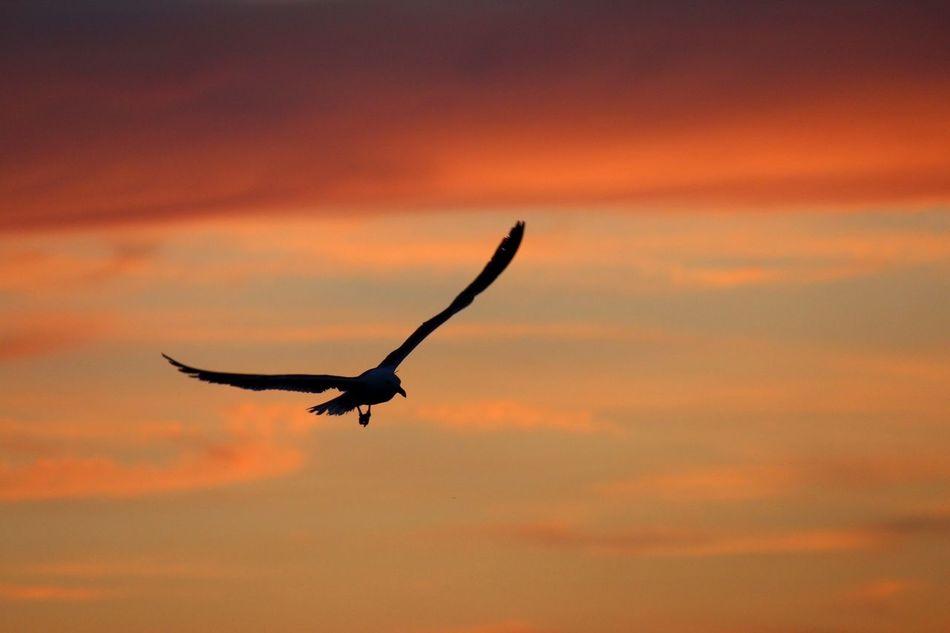 Beautiful stock photos of silhouette, Animal Themes, Animals In The Wild, Bird, Dusk